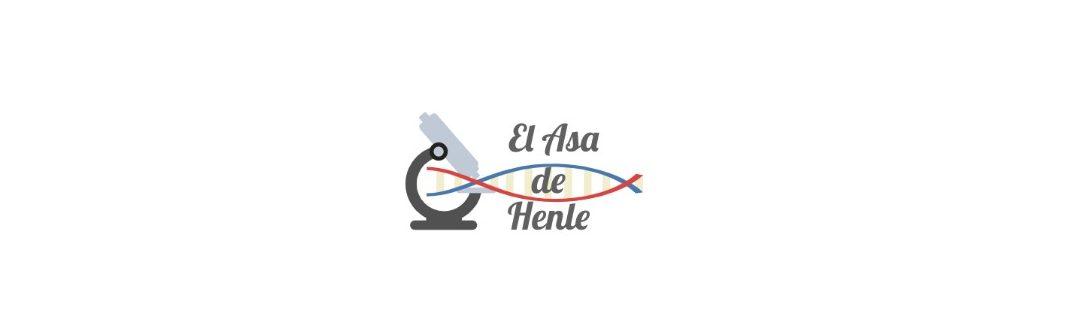 El asa de Henle